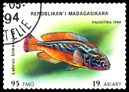 STAVROPOL, RUSSIA - July 31, 2016: a stamp printed by Malagasy Republic  shows,  the fishes with the inscription  Labrus bimaculatus,  series, circa 1994