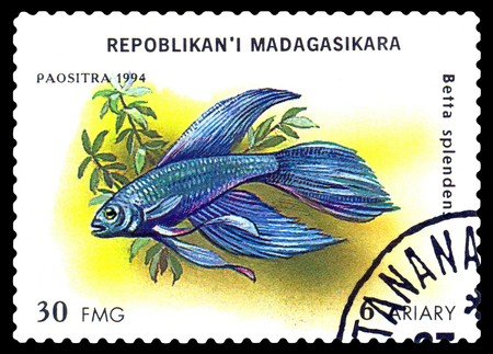 philately: STAVROPOL, RUSSIA - July 31, 2016: a stamp printed by Malagasy Republic  shows,  the fishes with the inscription   Betta splendens,  series, circa 1994