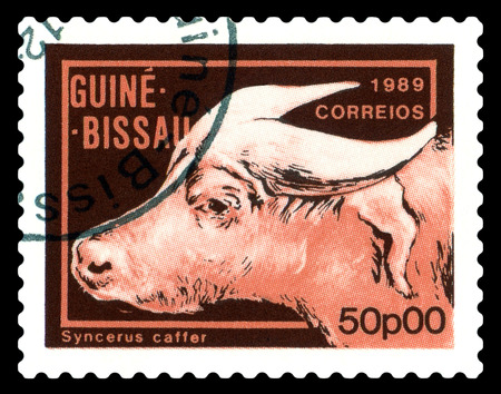 STAVROPOL, RUSSIA - A stamp printed by Guinea - Bissau,  shows African  Buffalo,  circa 1989.