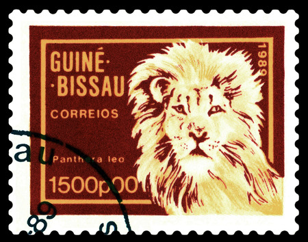 STAVROPOL, RUSSIA - A stamp printed by Guinea - Bissau,  shows African   Lion,  circa 1989.