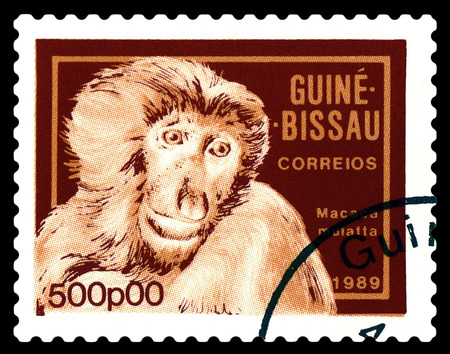 STAVROPOL, RUSSIA - A stamp printed by Guinea - Bissau,  shows Caudata macaque,  circa 1989. Stock Photo