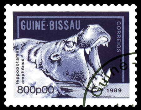 philately: STAVROPOL, RUSSIA - A stamp printed by Guinea - Bissau,  shows African  hippopotamus,  circa 1989. Stock Photo