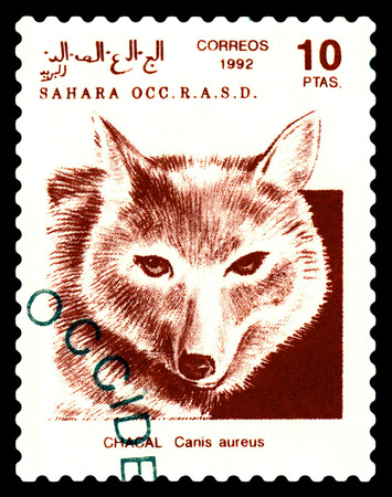 STAVROPOL, RUSSIA - A stamp printed in Sahrawi Arab Democratic Republic (SADR), shows  Golden jackal (Canis aureus), circa 1992