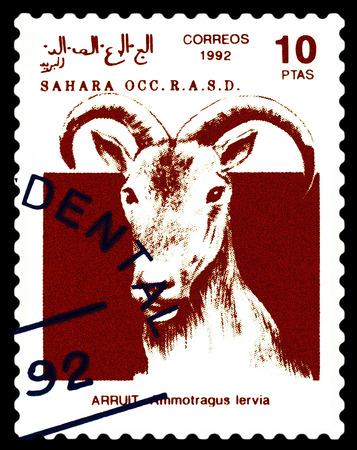 STAVROPOL, RUSSIA - A stamp printed in Sahrawi Arab Democratic Republic (SADR), shows   Scimitar Arruit (ammotragus lervia), circa 1992 Stock Photo