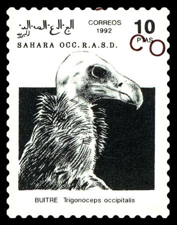 STAVROPOL, RUSSIA - A stamp printed in Sahrawi Arab Democratic Republic (SADR), shows  White-headed Vulture (Trigonoceps occipitalis), circa 1992