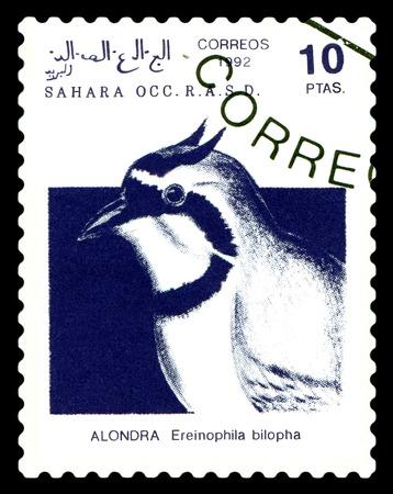 STAVROPOL, RUSSIA - A stamp printed in Sahrawi Arab Democratic Republic (SADR), shows Temmincks Lark (Eremophila bilopha), circa 1992