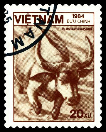 comunicación escrita: STAVROPOL, RUSSIA - A stamp printed in Vietnam shows  buffalo (Bubalus   bubalus), circa 1984