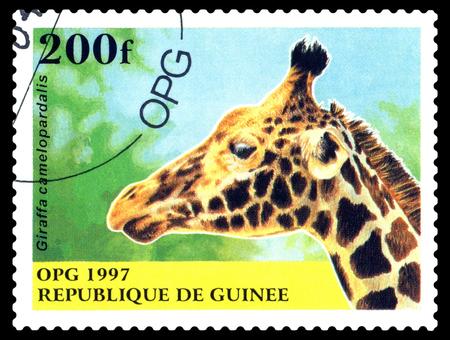 STAVROPOL, RUSSIA - October 12, 2016: a stamp printed in Guinea (Republique de Guinee), shows  Giraffe, camelopardalis,  circa 1997.