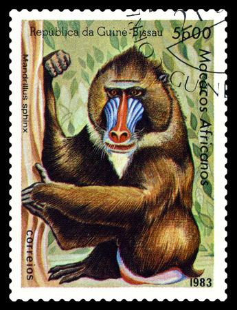 mandrill: STAVROPOL, RUSSIA - October 31, 2016: a stamp printed in Guinea-Bissau (República da Guinà © -Bissau) shows Mandrill (Mandrillus sphinx), circa 1983.