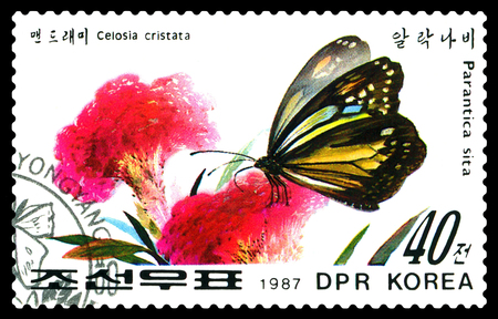 STAVROPOL, RUSSIA - December 14, 2016: A stamp printed in DPR Korea shows flowers Celosia cristata and butterfly Parantica sita, circa 1987.