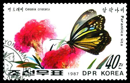 poststempel: Stawropol, Russland - 14. Dezember 2016: Ein Stempel in DPR Korea gedruckt zeigt Blumen Celosia cristata und Schmetterling Parantica Sita, circa 1987.