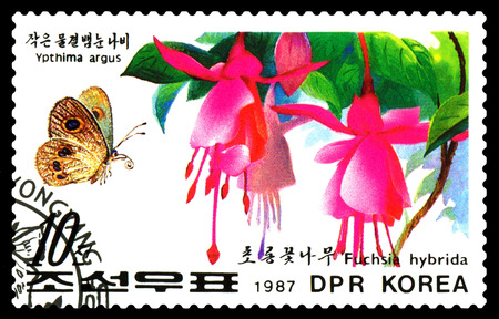STAVROPOL, RUSSIA - December 14, 2016: A stamp printed in DPR Korea shows flowers Fuchsia hybrida and butterfly Ypthima argus, circa 1987. Editorial