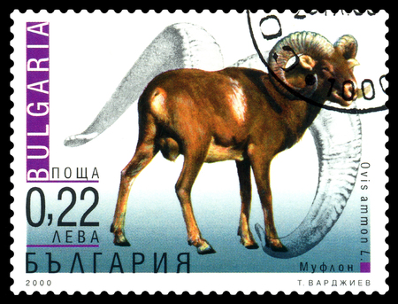 STAVROPOL, RUSSIA - January 02, 2017: A Stamp sheet printed in Bulgaria shows Ovis ammon (mouflon), circa 2000