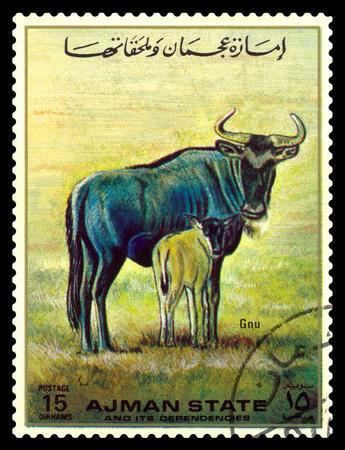 STAVROPOL, RUSSIA -  April  03, 2017:  A stamp printed in Ajman shows wildebeest  (Gnu), circa 1967 Editorial