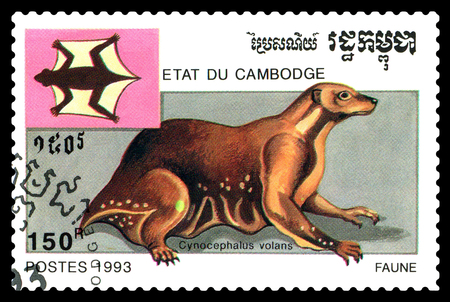 STAVROPOL, RUSSIA - April 17, 2017 : A Postage Stamp Printed in the Cambodia  Shows  melanogaster flying (Cynocephalus volans), circa 1993