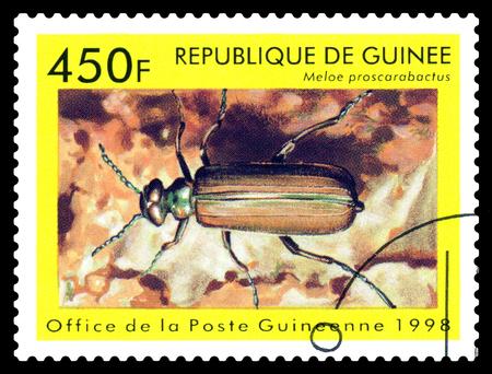 STAVROPOL, RUSSIA - April 30, 2017: a stamp printed in Guinea (Republique de Guinee)  shows  Beetle  Meloe proscarabactus, series beetle, circa 1998