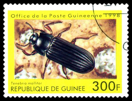 STAVROPOL, RUSSIA - April 30, 2017: a stamp printed in Guinea (Republique de Guinee)  shows  Beetle Tenebria mollitor, series beetle, circa 1998