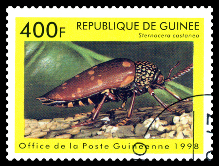 STAVROPOL, RUSSIA - April 30, 2017: a stamp printed in Guinea (Republique de Guinee)  shows  Beetle  Sternocera castanea, series beetle, circa 1998 Editorial