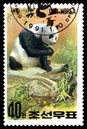 STAVROPOL, RUSSIA - May 14, 2017: A Stamp sheet printed in North Korea shows Panda are eating, series Pandas, circa 1991 Editorial