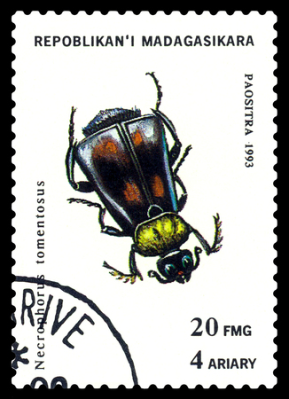 STAVROPOL, RUSSIA - May 23, 2017: a stamp printed in Malagasy Republic shows  Beetle  Necrophorus tomentosus, series beetle, circa 1993 Editorial
