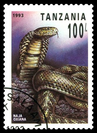 STAVROPOL, RUSSIA - May 06, 2017: a stamp printed by  Tanzania  shows  Central Asian cobra (Naja Oxiana), series Reptile,  circa 1993