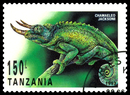 STAVROPOL, RUSSIA - May 21, 2017: a stamp printed by  Tanzania  shows   Chameleon Jackson (Chamaeleo Jacksonii), series Reptile,  circa 1993 Editorial