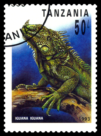 STAVROPOL, RUSSIA - May 21, 2017: a stamp printed by  Tanzania  shows   Iguana (Cyclura nubila), series Reptile,  circa 1993