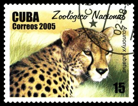 STAVROPOL, RUSSIA - June 08.2017: A stamp printed in Sao Tome and Principe shows Cheetah (Acinonux jubatus),  circa 2005 Editorial