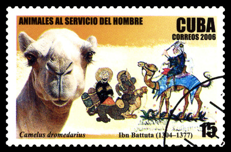 STAVROPOL, RUSSIA - June 07, 2017: a stamp printed by  Cuba  shows Camel dromedary, circa 2006