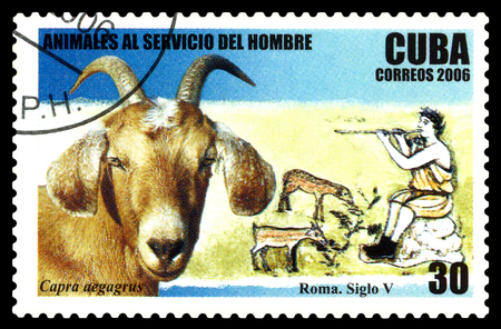 STAVROPOL, RUSSIA - June 07, 2017: a stamp printed by  Cuba  shows Capra aegagrus, circa 2006 Editorial