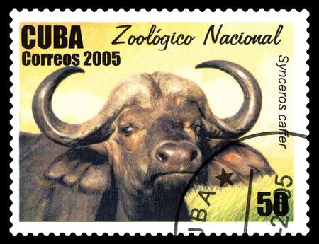 STAVROPOL, RUSSIA - June 08.2017: A stamp printed in Cuba shows Synoerus oaffer (Syncerus caffer),  circa 2005 Editorial