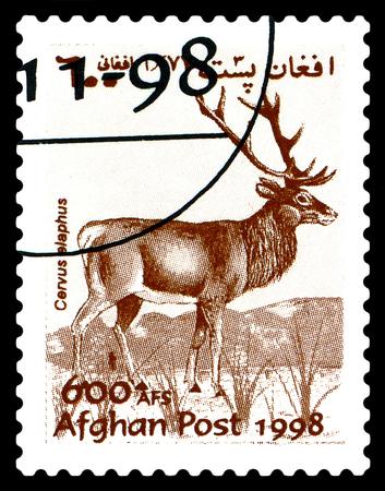 STAVROPOL, RUSSIA - June 12, 2017: A stamp printed in Afghanistan shows  Noble deer (Cervus elaphus) circa 1998 Editorial