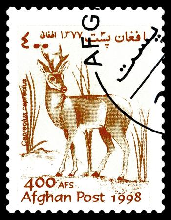 STAVROPOL, RUSSIA - June 14, 2017: A stamp printed in Afghanistan shows  European Roe (Capreolus, capreolus) circa 1998