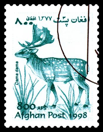 STAVROPOL, RUSSIA - June 12, 2017: A stamp printed in Afghanistan shows  European doe (Dama dama) circa 1998