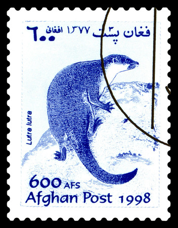 STAVROPOL, RUSSIA - June 12, 2017: A stamp printed in Afghanistan shows  River otter (lutra,  lutra) circa 1998