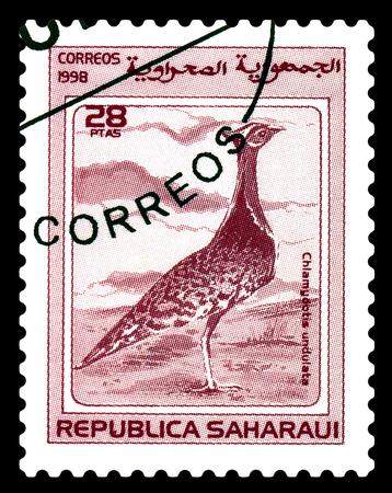 STAVROPOL, RUSSIA - June 24, 2017 : A stamp printed  by Sahrawi Republic, shows  bird  North African houbara (Chlamydotis undulata), circa 1998 Editorial