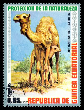 STAVROPOL, RUSSIA - July 26, 2017: A Stamp sheet printed in EQUATORIAL GUINEA shows  African dromedary ( African cursor), circa 1974