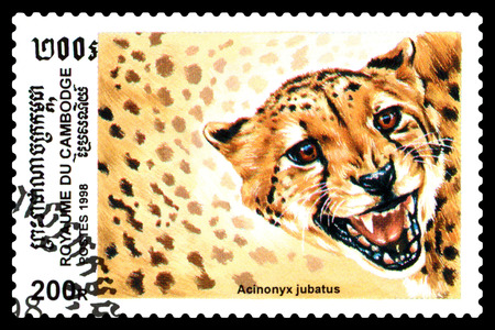 STAVROPOL, RUSSIA - August  04, 2017 : A Postage Stamp Printed in the Cambodia , shows Acinonux sealion (Acinonux jubatus), series, circa 1998