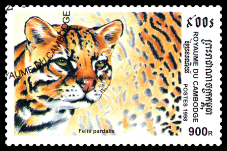 STAVROPOL, RUSSIA - August  04, 2017 : A Postage Stamp Printed in the Cambodia , shows Ocelot (Felis pardalis), series, circa 1998