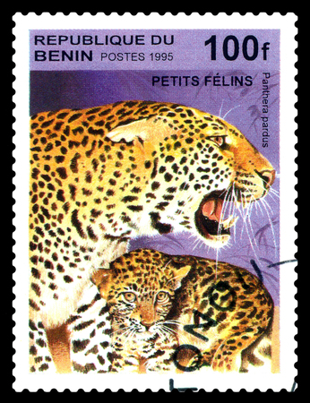 STAVROPOL, RUSSIA - August 07, 2017: A Postage Stamp Printed in the Benin shows Panther, leopard (Pantera pardus), circa 1995