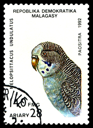perforated: STAVROPOL, RUSSIA - August 18, 2017: A stamp printed by Malagasy shows bird an   parrot  Melopsittacus undulatus, circa 1992 Stock Photo