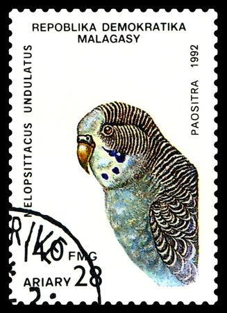 poststempel: STAVROPOL, RUSSLAND - 18. August 2017: Ein Stempel von Malagasy gedruckt zeigt Vogel ein Papagei Melopsittacus undulatus, circa 1992