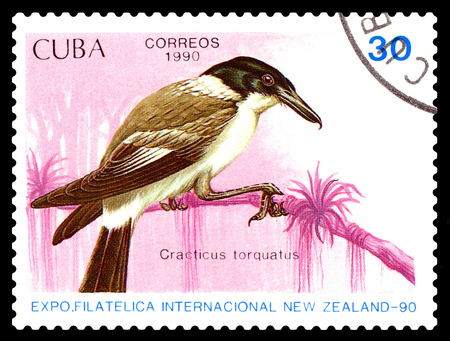 old envelope: STAVROPOL, RUSSIA - August 27, 2017: A stamp printed by Cuba shows bird   Cracticus torquatus, New Zealand, circa 1990