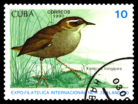 STAVROPOL, RUSSIA - August 27, 2017: A stamp printed by Cuba shows bird   Henicus lonyipes, New Zealand, circa 1990 Editorial