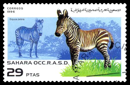STAVROPOL, RUSSIA - August  29, 2017 : A Postage Stamp Printed in Sahrawi Republic, shows  zebra (  Equus zebra), series, circa 1996