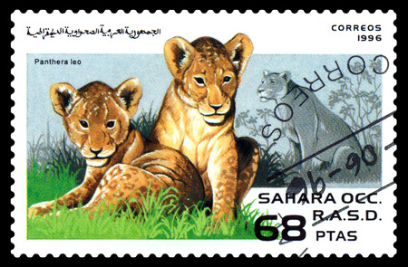 old envelope: STAVROPOL, RUSSIA - August  29, 2017 : A Postage Stamp Printed in Sahrawi Republic, shows lion ( Panthera leo), series, circa 1996 Editorial