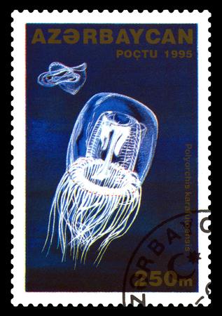 STAVROPOL, RUSSIA - November 28. 2017: A stamp printed in Azerbaijan  shows Jellyfish with umbrella, Polyorchis karafuloensis,  circa 1996