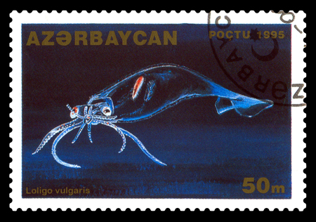STAVROPOL, RUSSIA - November 28. 2017: A stamp printed in Azerbaijan  shows japonicus, Loligo vulgaris,  circa 1996