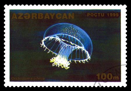 STAVROPOL, RUSSIA - November 28. 2017: A stamp printed in Azerbaijan  shows Jellyfish with umbrella Orchistoma cap, Orchistoma pileus, series Marine Animals. circa 1995 Editorial