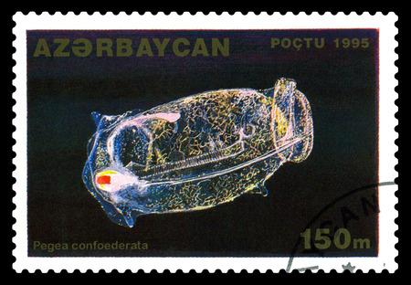 STAVROPOL, RUSSIA - November 28. 2017: A stamp printed in Azerbaijan  shows salpas, Pegea confoedrata,  circa 1995